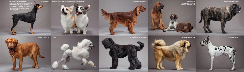 Журнал о собаках от CofranceSARL